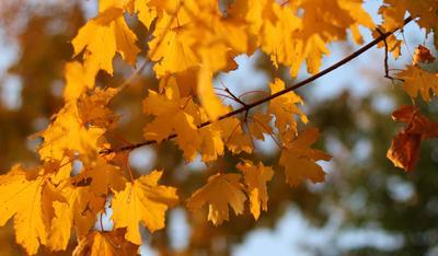 Осень за кадром..