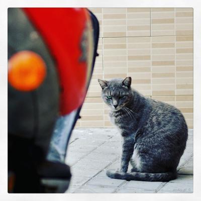 кискАфото(уличный портрет)