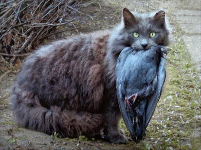 Добыча. кот.добыча.голубь.05.04.2021 15 23 00
