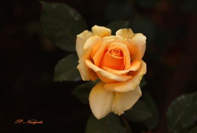 В царстве цветов .