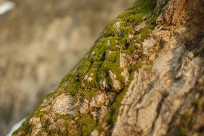 покрытые зеленым мхом природа