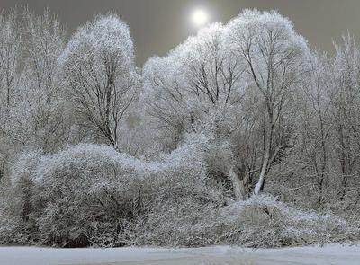 ***Сказка зимнего леса