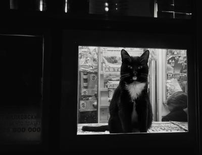 Ночная смена кот, газетный киоск