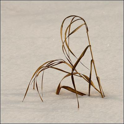 Упорные зима трава упорно упор-но у-порно