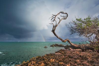 *** аруба океан камни дерево скалы море радуга диви-диви