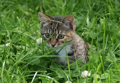 Грушка:) кошка в травке:)