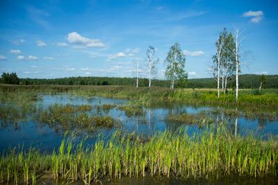 река Чусовая река Чусова, Ревда, Россия, природа, пейзаж, небо, облака, лето, зелень, трава, деревья, вода, синева