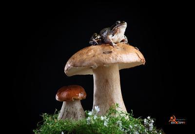 Царевна... Лягушка грибы