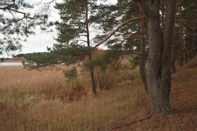 На Селигере. Селигер Осень Природа Пленка