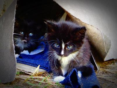 ***Трущобы котята бездомные животные