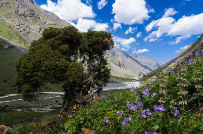 *** Киргизия Аламедин горы
