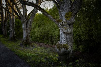 Леший Лёша лес дерево древень фангорн