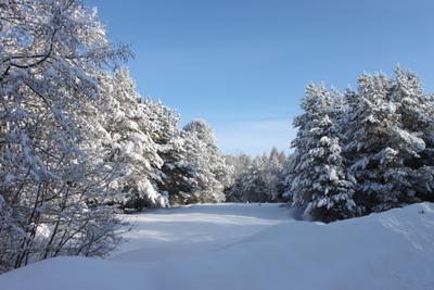 Зима. зима лес