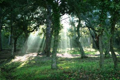 Утро Природа, лес, утро