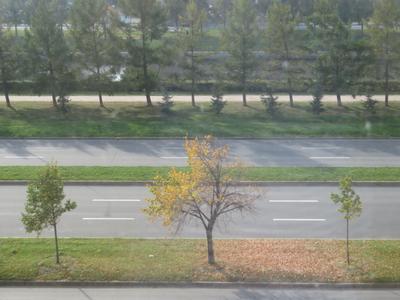 1 октября 2020 2020 Санкт-Петербург осень деревья