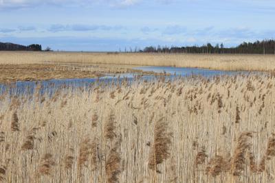 У озера Трава весна озеро речка