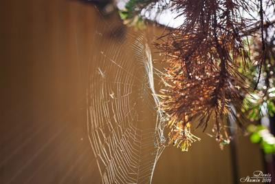 Работа паука паутина природа