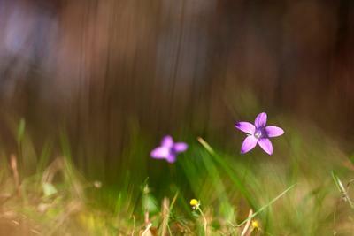 *** Октябрь полевой цветок бокэ