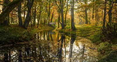 Краски осени усадьба пейзаж парк осень история