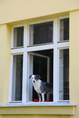 Друг собака окно