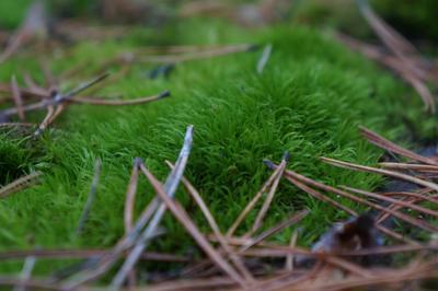 Лесной мох Природа лес осень мох