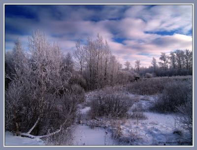 *** Снег Россия иней лес зима холод мороз