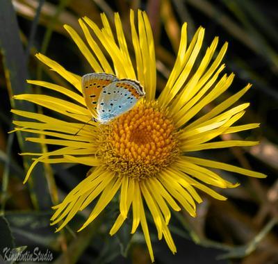 ***Цветок с бабочкой*** Цветок бабочка август лето