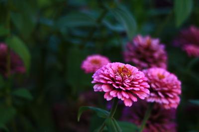 Цветы природа цветы