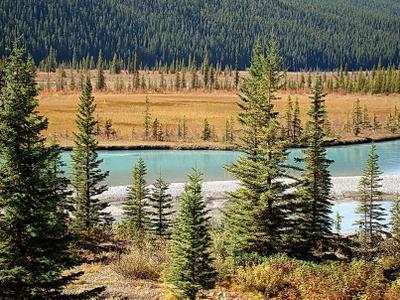 осенняя палитра Альберты Канада Альберта Банф Banf озеро горы отражения лес природа пейзаж