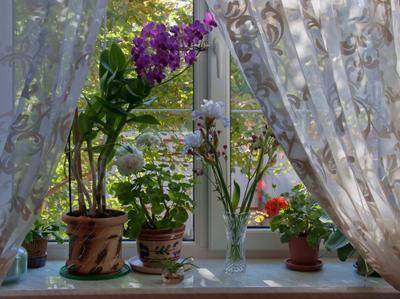 Погода в доме. цветы подоконник осень бабье лето