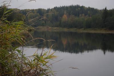 На Луге осень... река луга осень