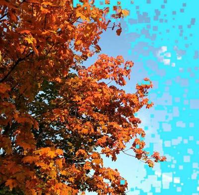 Осень природа временагода