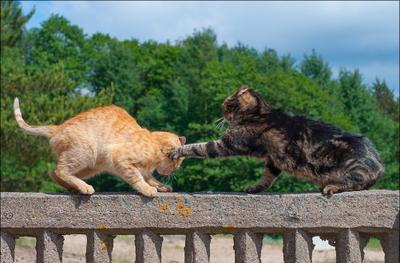 Брысь с моего забора! (2) кошка Динка кот безымянный
