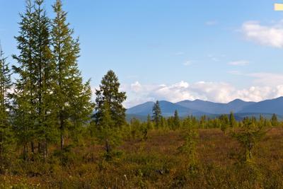 *** лес горы небо
