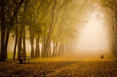 Осенний парк Осень туман сентябрь парк