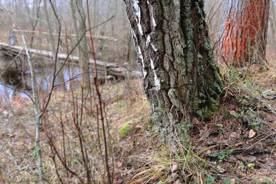 осенний этюд у моста: два дерева