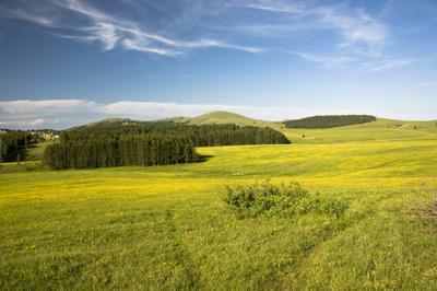 Полевые и лесные поле луг златибор