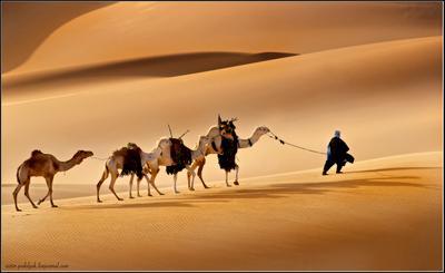 Странствие через пески вечности... Ливия Сахара песок караван путешествие