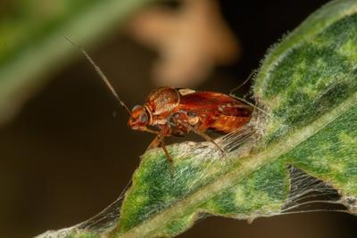 *** жук таракан макро canon 70d насекомые