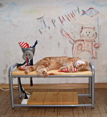 Рыбный день или дримы моего кота мясорубка кот мечта рыба