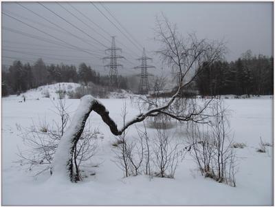 Линии судьбы Дерево берёза туман замёрзшее озеро зимние зарисовки