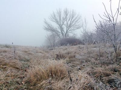 frozen beauty мороз иней