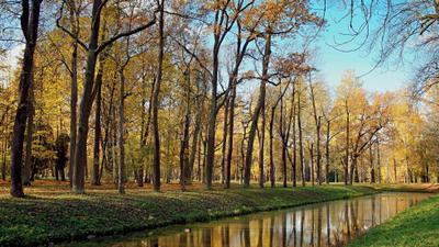 Царскосельская осень 3 Царское Село осень парк