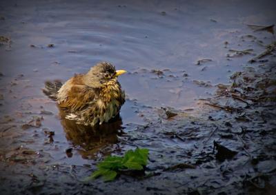 *** птицы купание вода