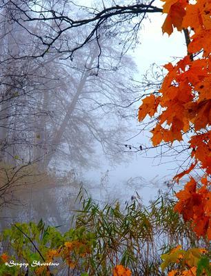 Краски осени Осень туман озеро красные листья дымка
