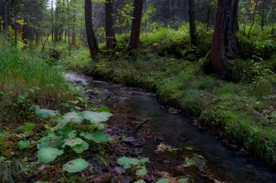 *** Ручей лес чистая вода природа главные ценности