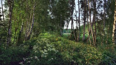 Июньский вечер июнь дамба болота вечер