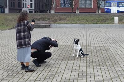 Фотосессия Собака