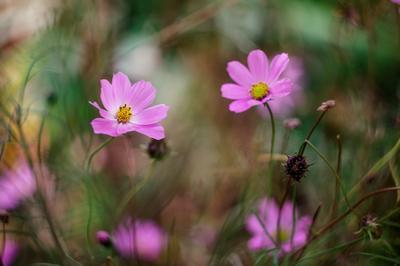 *** гелиос 44-6 природа цветы
