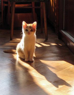Солнечный кошки